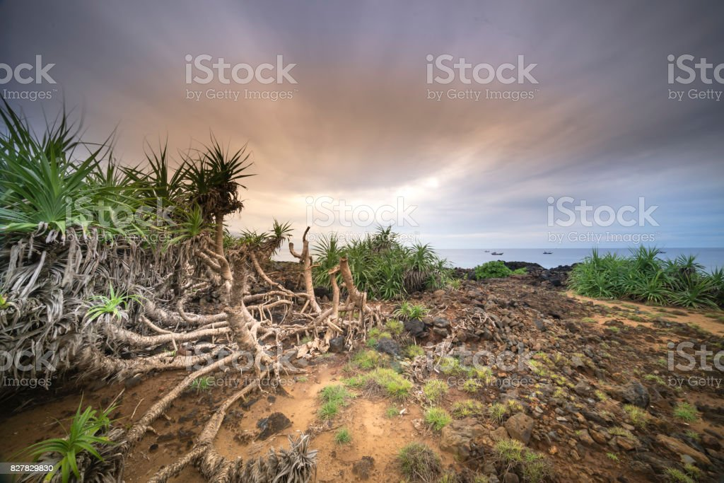 Beautiful landscape with green grass and rock on beach in Lyson island stock photo