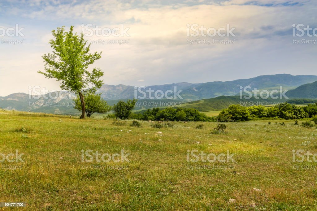 Beautiful landscape with lone tree stands on a green field or hill. Dramatic field view royalty-free stock photo
