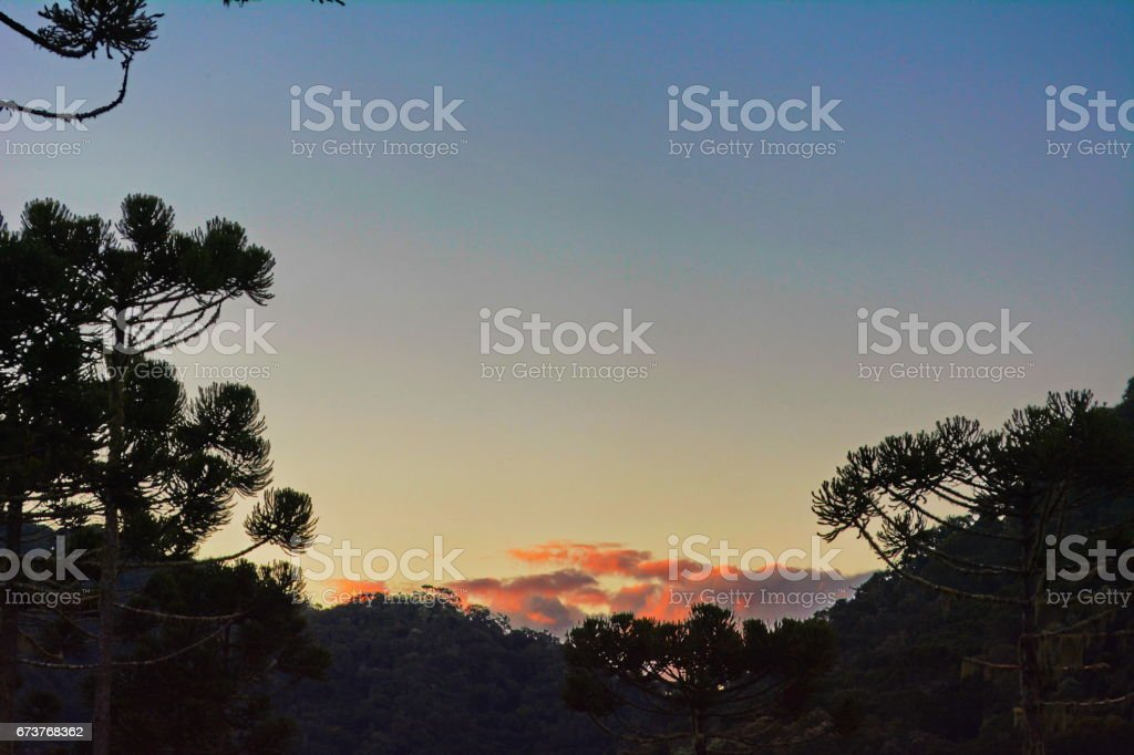 Beautiful landscape with pines photo libre de droits