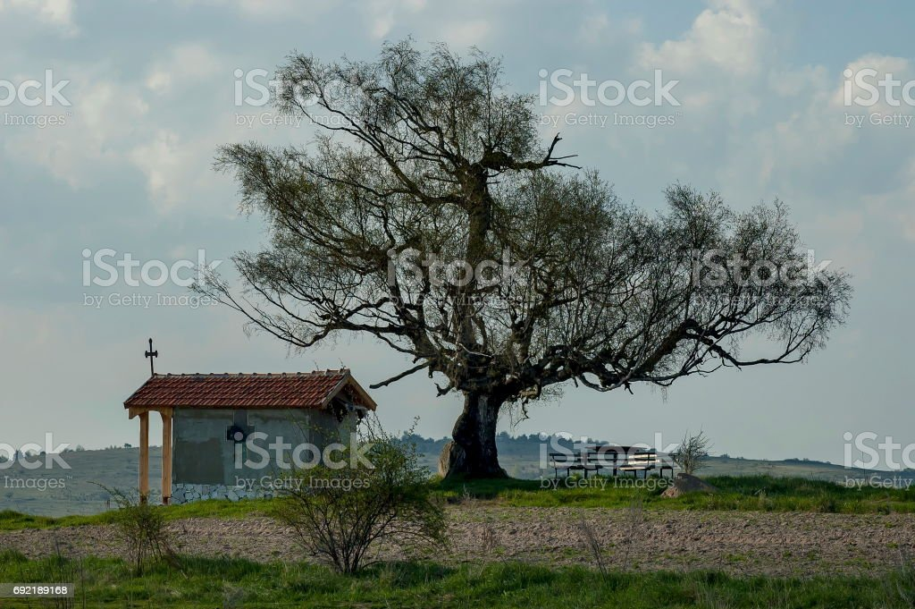 Beautiful  landscape with springtime venerable birch tree and old chapel, located in Plana mountain stock photo