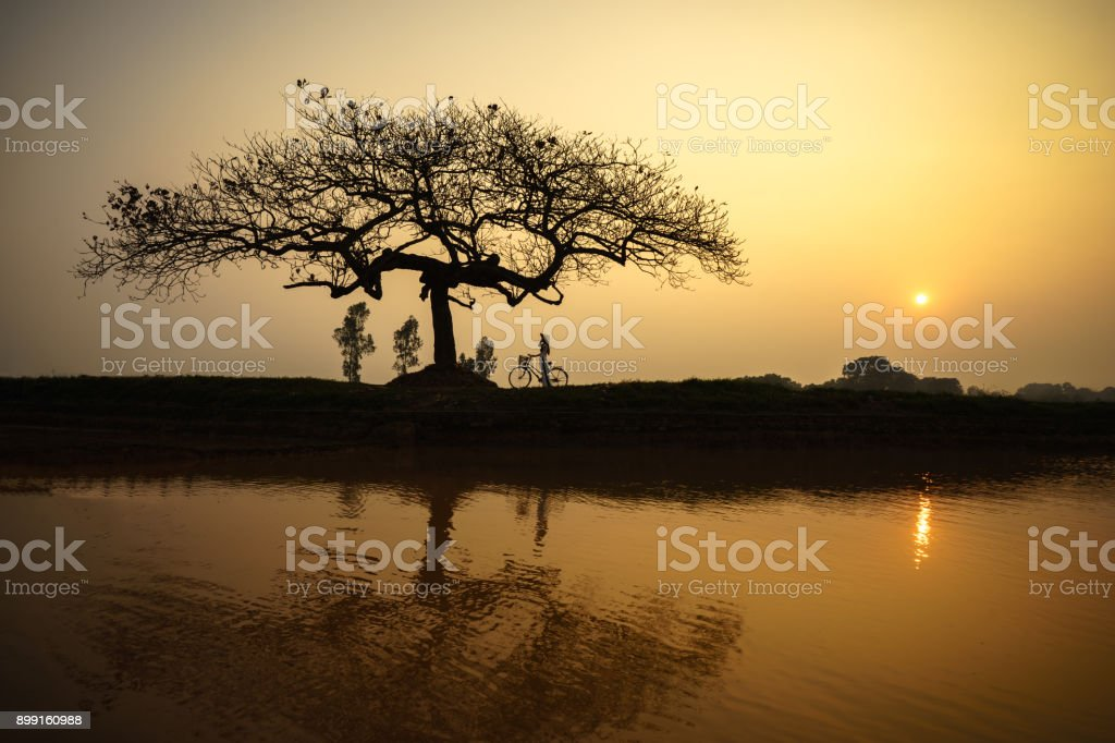 Beautiful landscape with trees silhouette and reflection at sunset with Vietnamese woman wearing traditional dress Ao Dai standing under the tree stock photo
