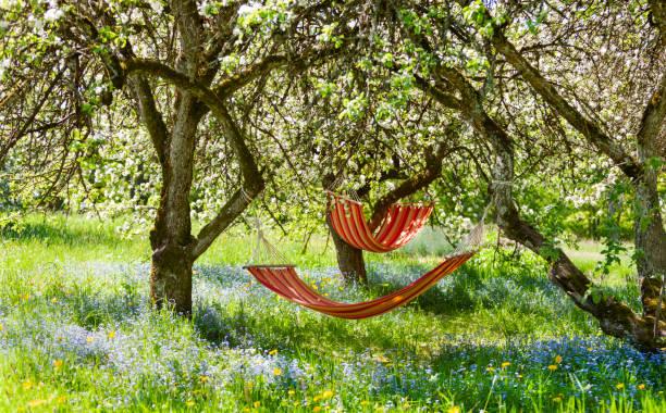 Bela paisagem com duas redes vermelhas no jardim da primavera com macieiras florescendo, dia ensolarado. Conceito de relaxamento, turismo rural. Foco seletivo - foto de acervo