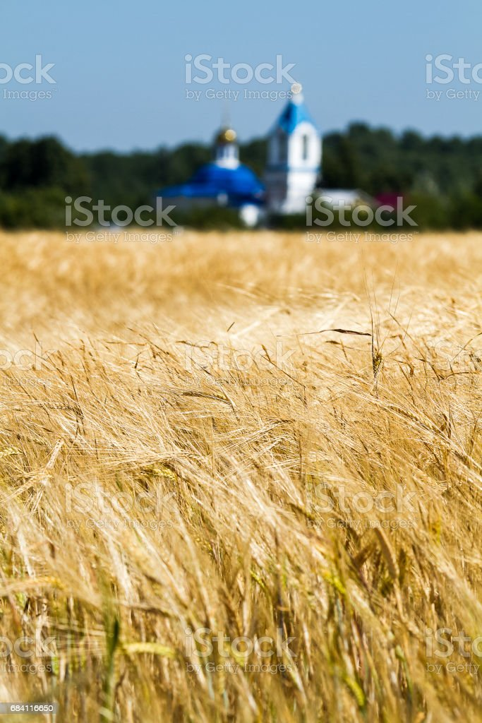 Beautiful landscape with yellow rye field and church on background photo libre de droits