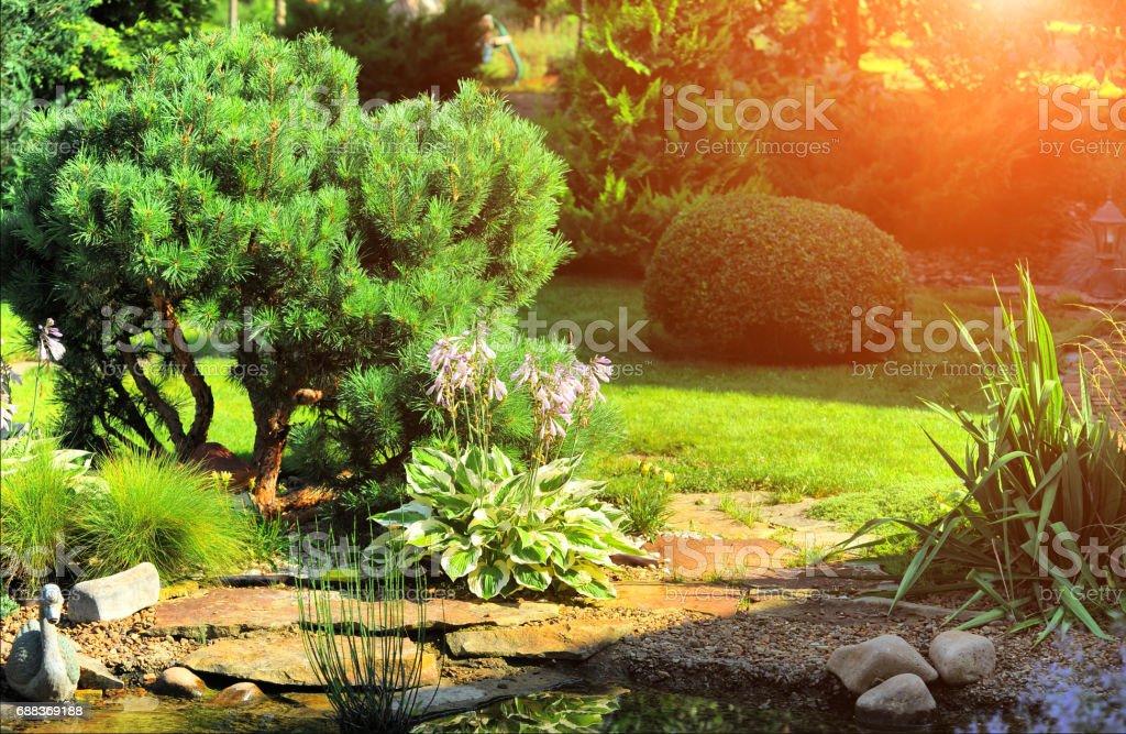 schöne Landschaft mit wunderschönen Pflanzen – Foto