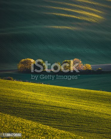 Nature rural landscape spring agriculture texture background view with green rolling waves hills, yellow canola flower fields and blossoming spring trees highlighted by setting sun lights in South Moravian Region, Brno, Czech Republic during sunset.