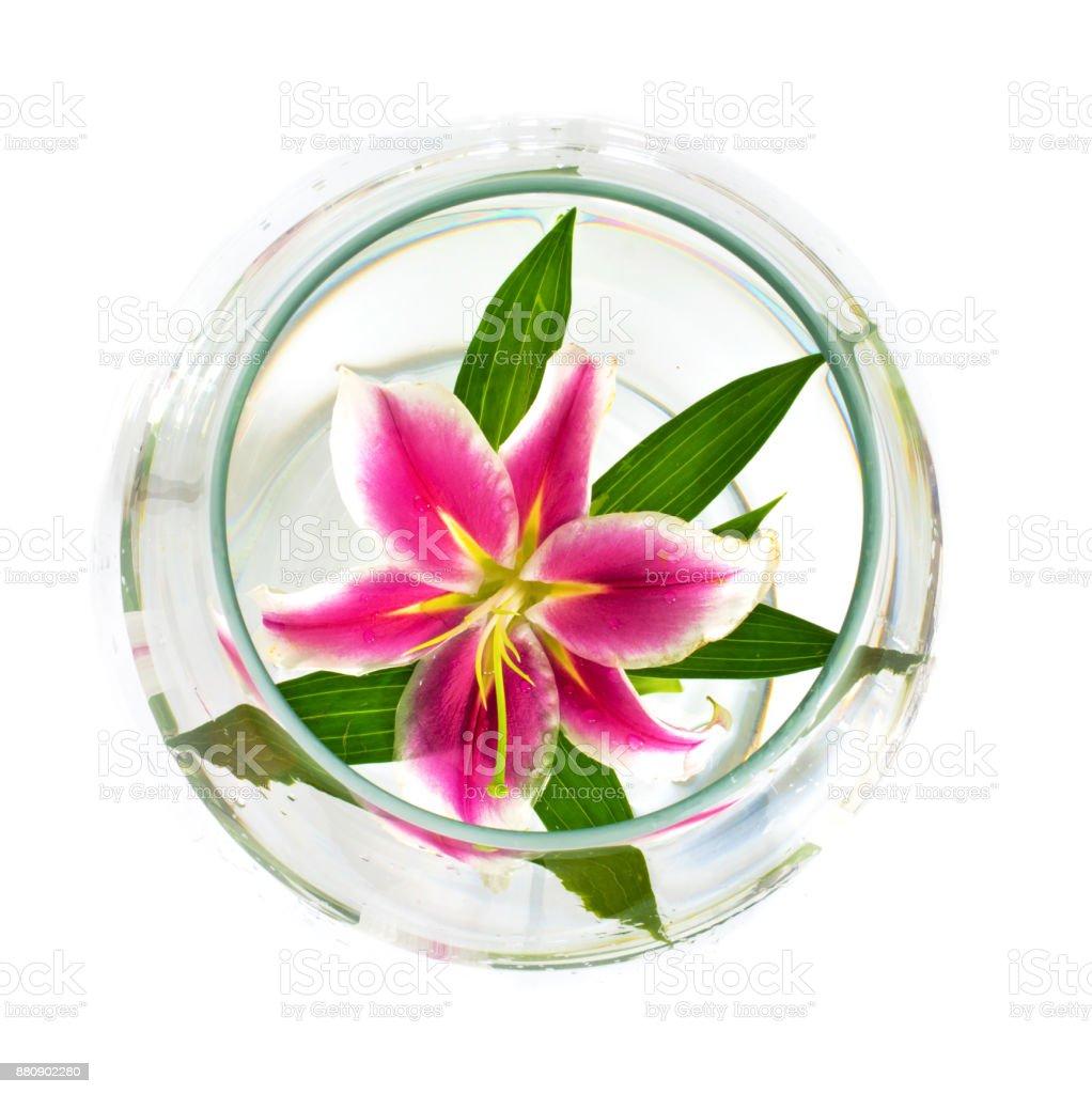 hermosas flores grandes de lirios en una copa sobre un fondo blanco. - foto de stock
