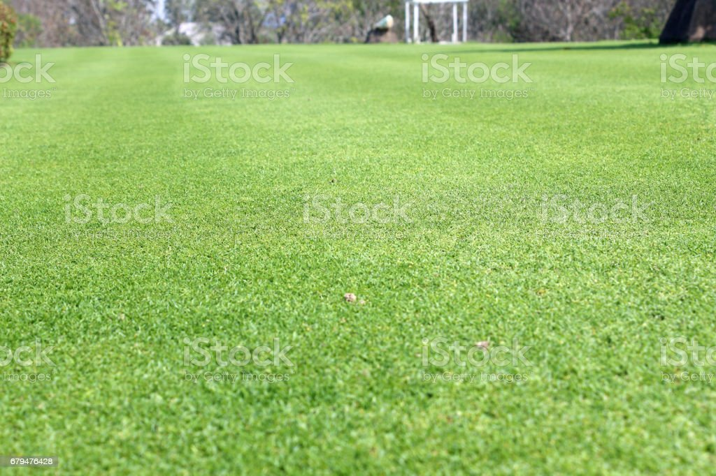 Beautiful lawn in the garden was trimmed. 免版稅 stock photo
