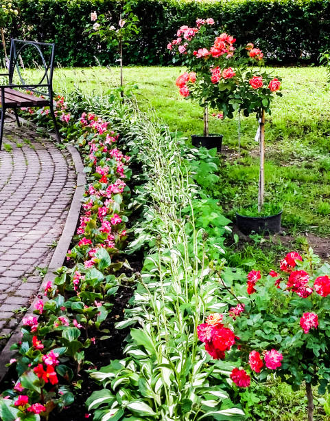 Beautiful lawn with roses and flowers stock photo