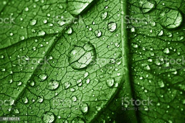 Photo of beautiful leaf with drops