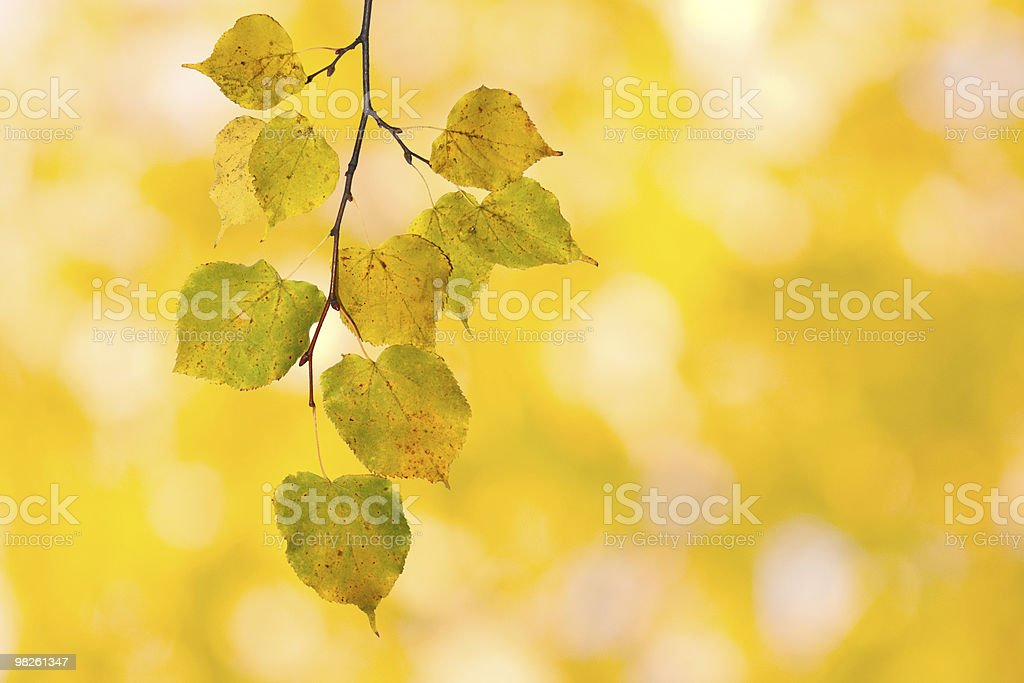 Belle foglie in autunno foto stock royalty-free