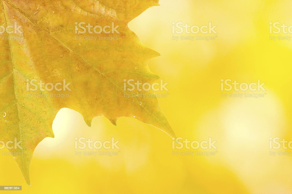 Beautiful leaves in autumn royalty-free stock photo
