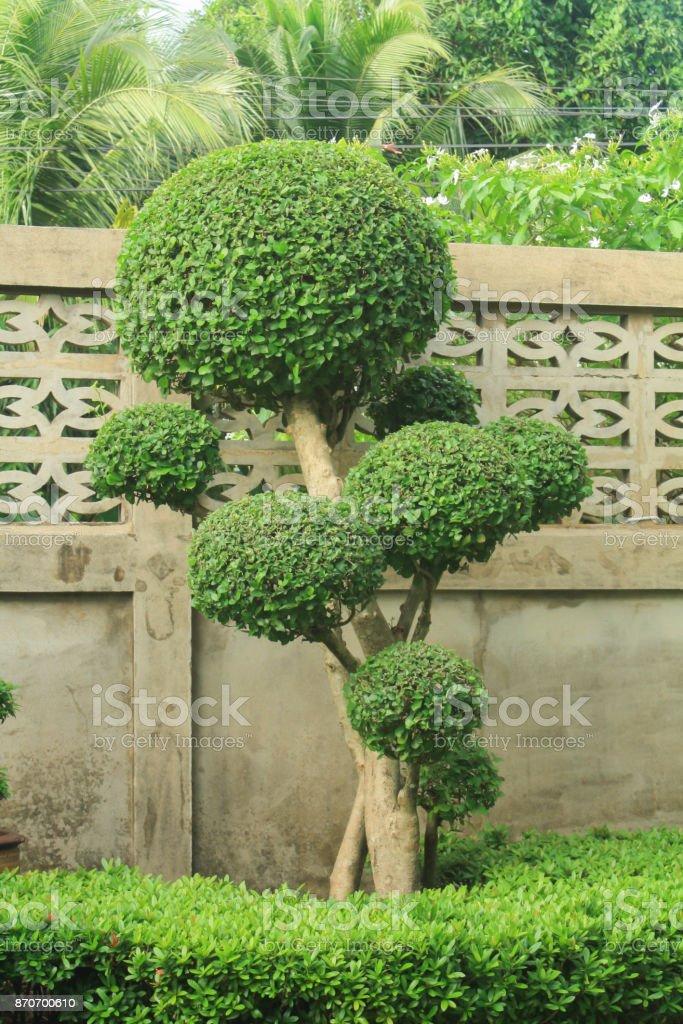 Photo libre de droit de Belles Feuilles Dans Le Jardin ...
