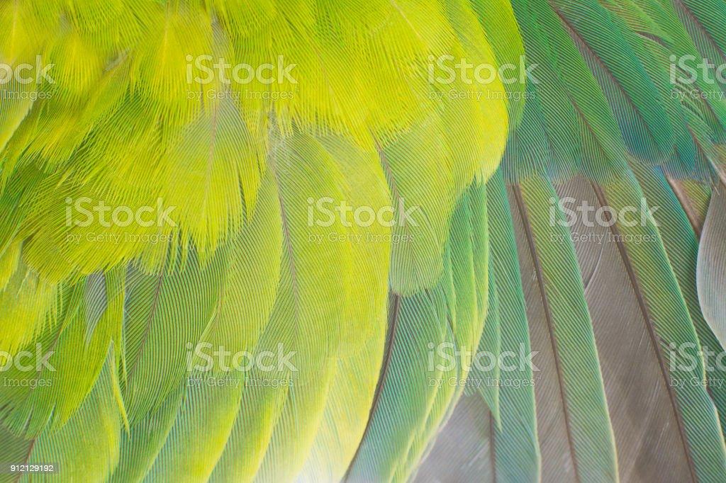 Beautiful light green feather background stock photo