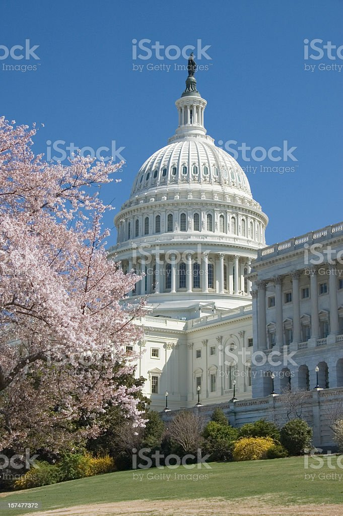 Beautiful light pink cherry blossoms at Capitol Hill royalty-free stock photo