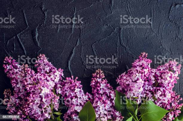 Beautiful lilac on dark stone background picture id682395558?b=1&k=6&m=682395558&s=612x612&h=ewsze9u5g0tyfviab7wt 6k7modcz6am5bj97o4huve=