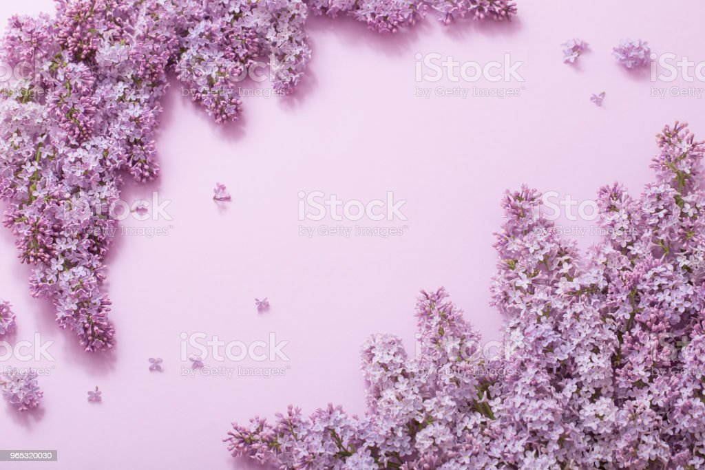 beautiful lilak on paper background royalty-free stock photo