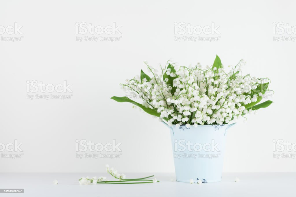 Beautiful Lily Of The Valley Flowers In Blue Vase On White