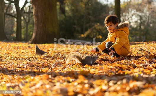 Beautiful little boy at the park during autumn staying very still as a pigeon and squirrel pass near him - Nature concepts