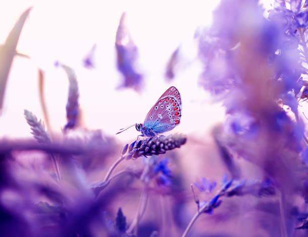 Beautiful little butterfly pigeon flew on a summer meadow and sits picture id1072164744?b=1&k=6&m=1072164744&s=612x612&w=0&h=yk94cp0 lqxai9gysysbulwmbdcjmguvdu4dl41g0le=
