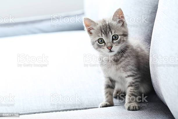 Beautiful little cat on a grey sofa picture id538041286?b=1&k=6&m=538041286&s=612x612&h=p9uxercfafk2gljc6i3wncqc tqfmumxeyxsywrfukk=