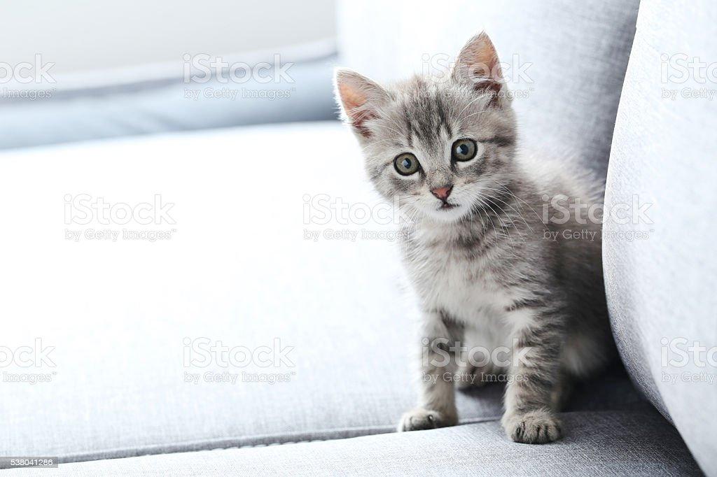 Beautiful little cat on a grey sofa stock photo