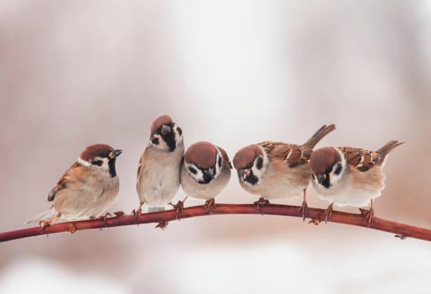 beaux petits oiseaux de noël assis sur otcei dans le jardin et drôle regardant à droite - oiseau chanteur photos et images de collection