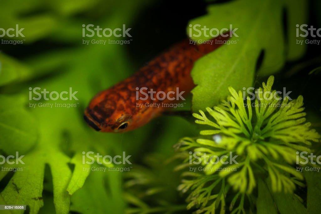 Beautiful little fish stock photo