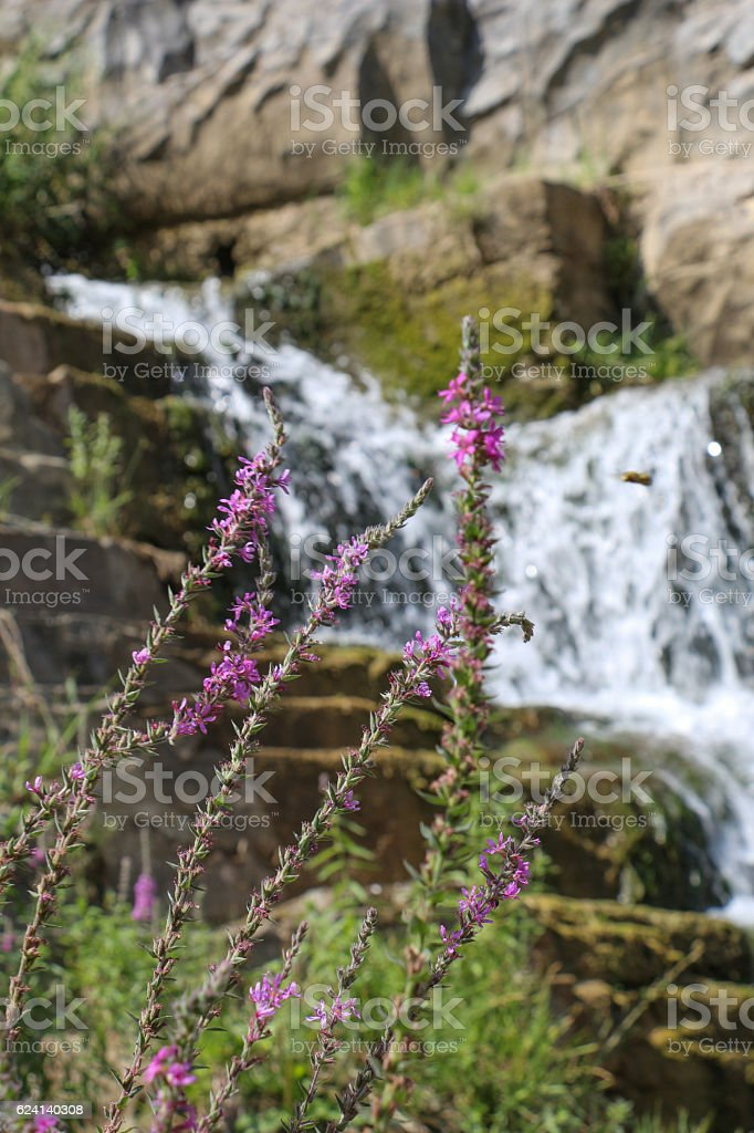Beautiful little waterfall in forest stock photo