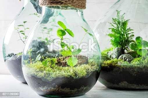 beautiful live plants in a jar save the earth idea stock photo istock. Black Bedroom Furniture Sets. Home Design Ideas