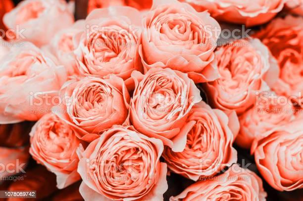 Beautiful living coral flowers picture id1078089742?b=1&k=6&m=1078089742&s=612x612&h=ewdcakxsdty4vl0qmlri7gavjtkhmsfcite8ykbkix0=