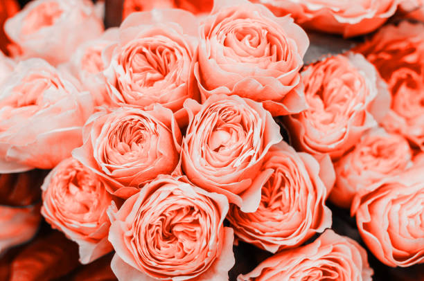 Beautiful living coral flowers picture id1078089742?b=1&k=6&m=1078089742&s=612x612&w=0&h=3z38y6jdhpbx 5hx2jbn7buc6qb184wlayetce2mj 4=