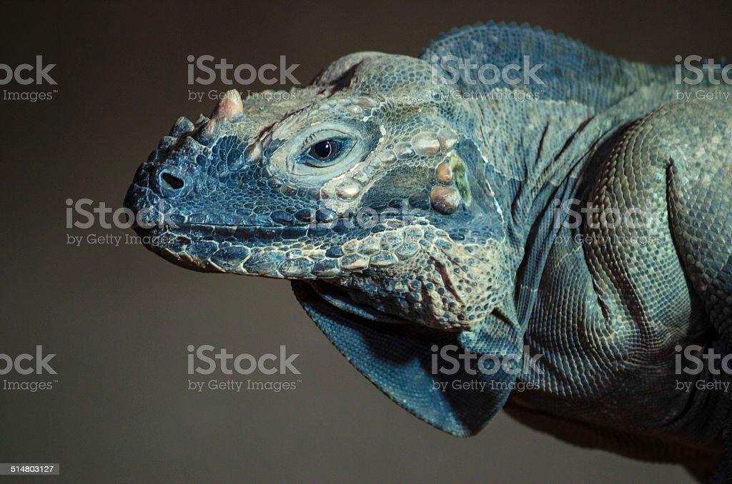 Beautiful Lizard stock photo