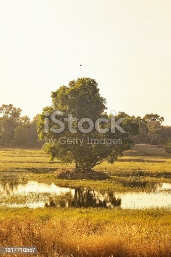 A painterly looking beautiful lone tree in the middle of a pond