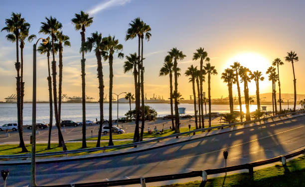 Beautiful Long Beach beach sunset with palm tree silhouettes and coastal highway. Beautiful Long Beach beach sunset with palm tree silhouettes and coastal highway. long beach california stock pictures, royalty-free photos & images