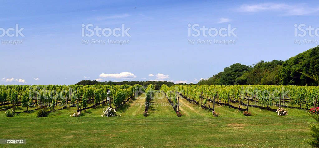 Beautiful Long Island Vineyard in Summer - Royalty-free 2015 Stock Photo
