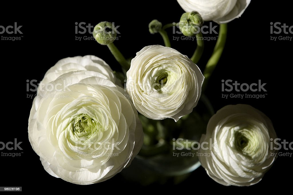 beautiful looking flowers 2 royalty-free stock photo