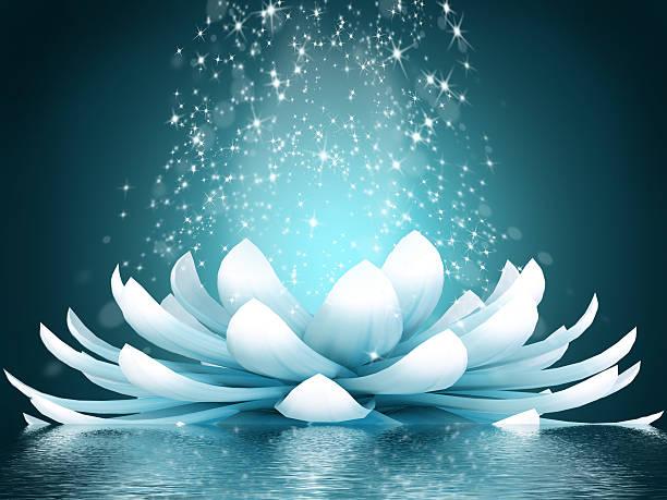 schöne lotusblume - lotus zeichnung stock-fotos und bilder