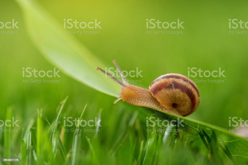 美麗可愛的蝸牛在草與晨露。 - 免版稅保加利亞圖庫照片