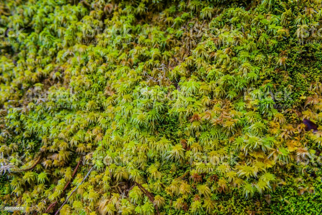 Beautiful lush New Zealand tropical rain-forest stock photo