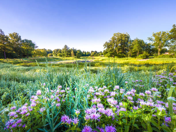 fotografía de paisaje bonito verano exuberante con flores silvestres y pastos en primer plano junto a un estanque y árboles verdes y cielo azul en el horizonte más allá. - illinois fotografías e imágenes de stock