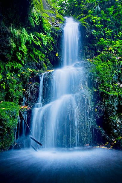 beautiful lush waterfall - waterfall stock photos and pictures