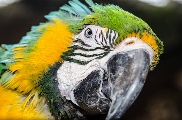 Beautiful Macaw stock photo