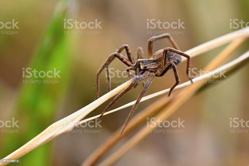 Tiro de bela macro de aranha na grama. - foto de acervo