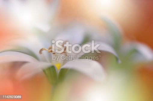 637797672 istock photo Beautiful macro shot,magic flowers.Border art design.Magic light.Extreme close up macro photography.Conceptual abstract image.Orange and White Background.Fantasy Art.Creative Wallpaper.Beautiful Nature Background.Artistic Spring Photo.Beauty in Nature. 1142523089