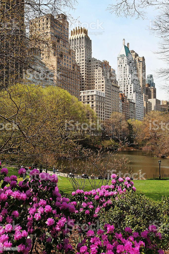 Beautiful magenta flowers bloom in the park of a large city stock photo