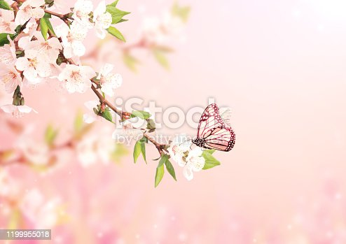 Magical scene with cherry flowers, butterfly and magic sparks. Beautiful nature spring background. Photo toned in light pink color. Copy space for text