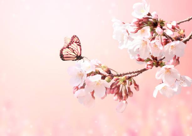 Beautiful magic spring scene with sakura flowers picture id1201268048?b=1&k=6&m=1201268048&s=612x612&w=0&h=iid3fsdfkklkq9 twzkrkn1 wc6hl6pgdrgmievvvbe=