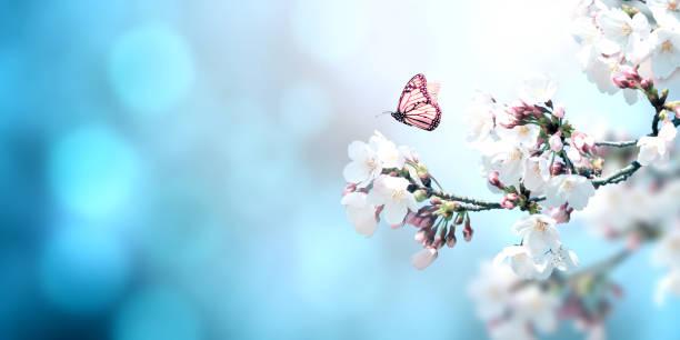 Beautiful magic spring scene with sakura flowers picture id1208623451?b=1&k=6&m=1208623451&s=612x612&w=0&h=wxxlfj3svaxn3gv82wzcrix esmunumkzqzoprj0aa0=