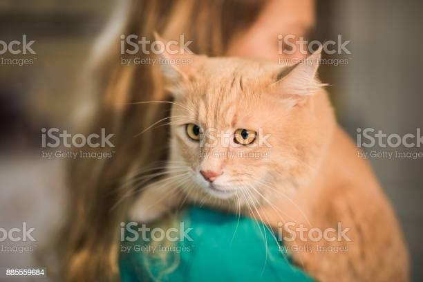 Beautiful maine coon cat on the visit to the veterinarian picture id885559684?b=1&k=6&m=885559684&s=612x612&h=x7d1yxebm kc93 g9z4dafhbjzyecbdjgmpc v5eyd4=