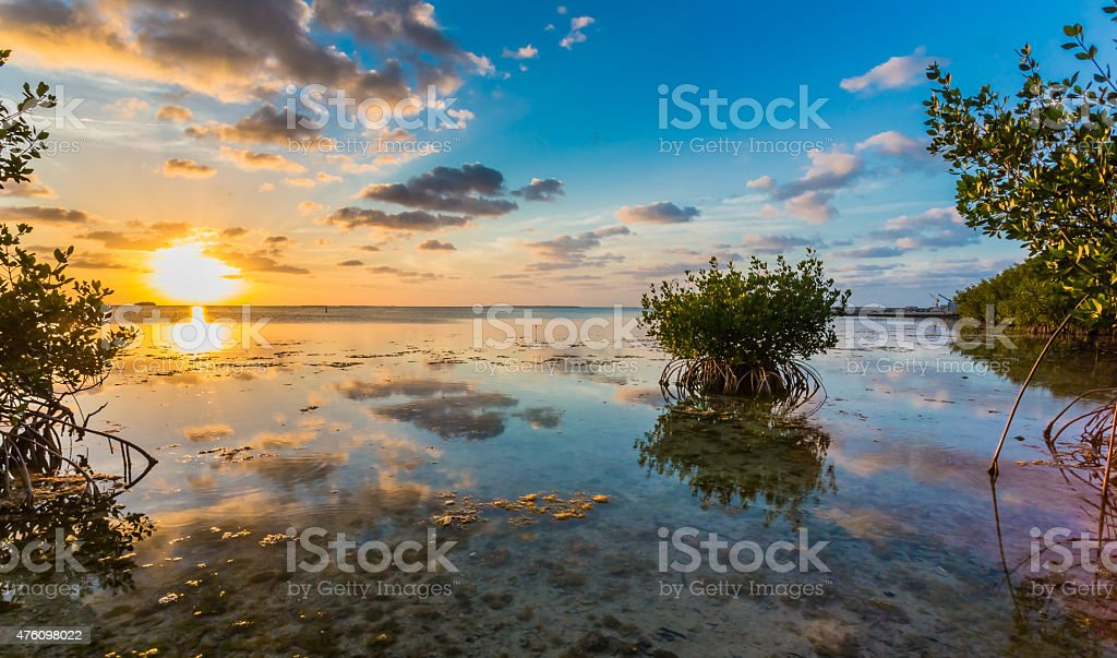 Beautiful mangrove swamp with hummock at sunset in Florida Keys stock photo